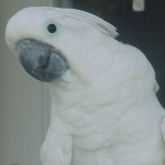 cockatoo_umbrella