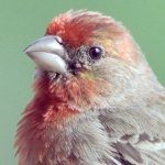 finches_house