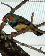 bird cage perches