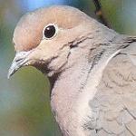 types_dove