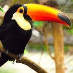 types_toucan