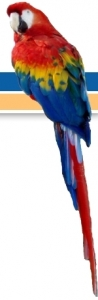 attribution_home_macaw