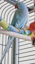 cages_medium.jpg.