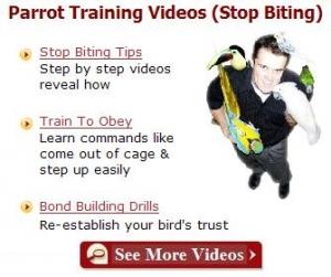 parrot-training