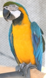 macaw perches