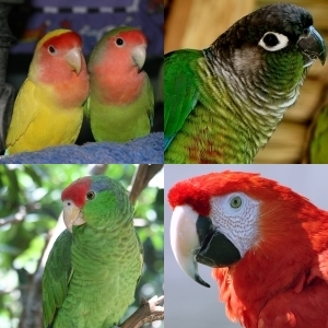 Choosing a pet bird