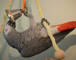 pet bird toys