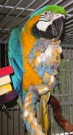 parrot supplies