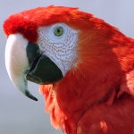 types_macaw