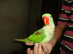 which-type-of-parrot-is-my-pet-21770636